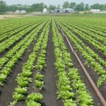 pe_agricultural_drip_irrigation_pipe